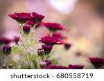 purple flowers after rain  ... | Shutterstock . vector #680558719