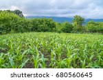small corn field agriculture.... | Shutterstock . vector #680560645
