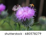Bumblebee On A Purple Thistle ...