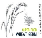 wheat germ. super food hand... | Shutterstock .eps vector #680579857