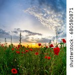 Small photo of Beautiful red poppies field sunrise panoramic view, Alsace, Fran
