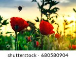 Flying Bumblebee And Red Poppy...
