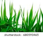 green foliage plants on a... | Shutterstock . vector #680593465