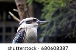 bird portrait | Shutterstock . vector #680608387