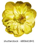 peony flower yellow on  a white ... | Shutterstock . vector #680661841