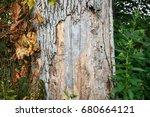 emerald ash borer damage | Shutterstock . vector #680664121
