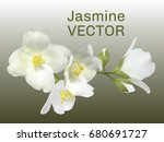 jasmine flower vector... | Shutterstock .eps vector #680691727