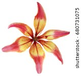 lily red yellow flower.... | Shutterstock . vector #680731075