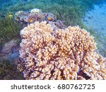 Pink Corals In Tropical...
