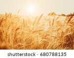 gold wheat field. beautiful... | Shutterstock . vector #680788135
