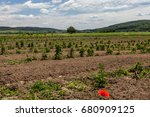 young sprouts of raspberry in... | Shutterstock . vector #680909125
