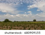 young sprouts of raspberry in... | Shutterstock . vector #680909155