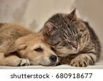 Stock photo cat and puppy 680918677