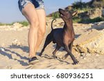 Stock photo young girl walking play with her dog xoloitzcuintli on sand beach at sunset 680936251