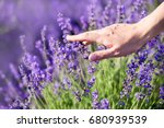woman's hand touching lavender  ... | Shutterstock . vector #680939539