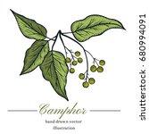 vector camphor hand drawn... | Shutterstock .eps vector #680994091