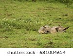 bat eared fox in serengeti | Shutterstock . vector #681004654