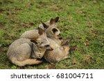 bat eared fox in serengeti | Shutterstock . vector #681004711