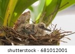 Baby Birds In A Nest On A Tree