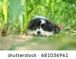 A Cute Puppy Is Lying In The...