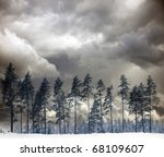 Row of pine trees in winter with moody sky - stock photo
