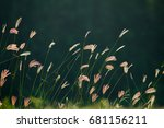 Grass Flowers In The Evening O...
