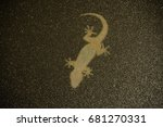 gecko seen from beneath... | Shutterstock . vector #681270331