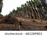 view on the cut down trees in... | Shutterstock . vector #681289801