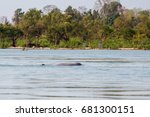 rare irawaddy dolphins boat... | Shutterstock . vector #681300151