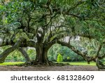 Tree Of Life In Audubon Park ...