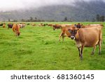 herd of cows in the meadow with ... | Shutterstock . vector #681360145