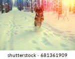 Dog Running In Pine Winter...