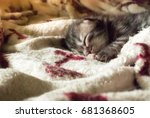 Stock photo natural lighting and shadow of blur newborn persian maine coon kitten on blanket newborn concept 681368605
