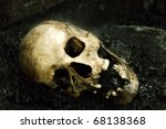 Human Skull In Rain Configured...