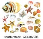 seashells stones watercolor | Shutterstock . vector #681389281