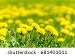 dandelions grass field with... | Shutterstock . vector #681401011