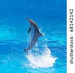 Bottlenose Dolphin Jumping Hig...