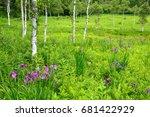 green marsh with iris ensata... | Shutterstock . vector #681422929