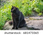 stray black cat. selective... | Shutterstock . vector #681473365