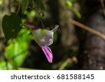 flower of thailand
