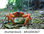 A Single Red Crab On Christmas...