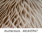 Abstract Mushroom Macro