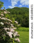 Small photo of Mountain Laurel blooming with the mountains in the background