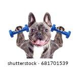 dog athlete bodybuilder  french ... | Shutterstock . vector #681701539