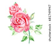 Two Pink Roses. Watercolor...