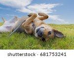 adorable mixed breed german... | Shutterstock . vector #681753241