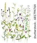 watercolor drawing wild plants...   Shutterstock . vector #681794764