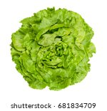 Butterhead Lettuce From Above....
