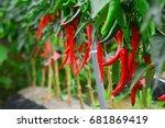 chili pepper  hot pepper ... | Shutterstock . vector #681869419