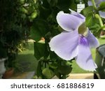 purple orchid | Shutterstock . vector #681886819